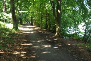 Większość trasy przebiega leśnymi duktami