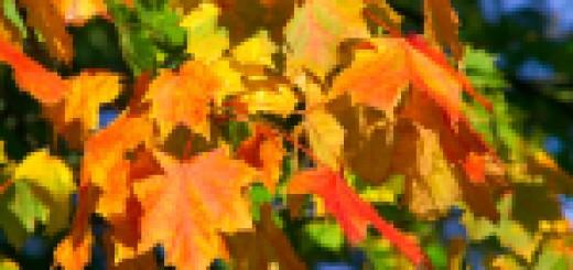Nadeszła jesień
